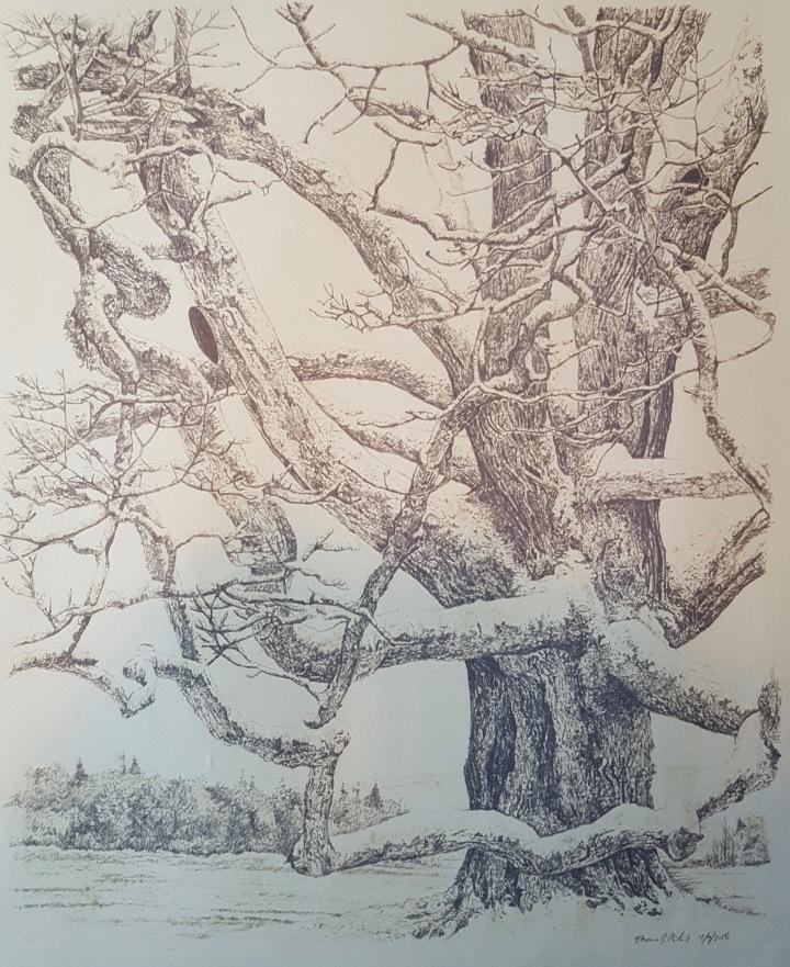 maple in winter